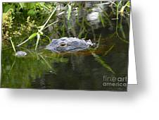 Alligator Hunting Greeting Card