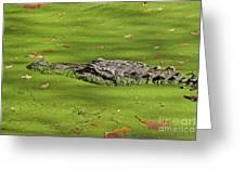 Alligator In Sun Greeting Card