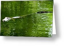 Alligator In Wait Greeting Card
