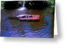 Alligator Resting Greeting Card