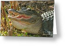 Alligator Showing Its Teeth Greeting Card