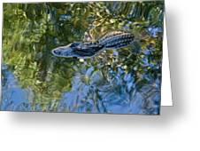 Alligator Stalking Greeting Card