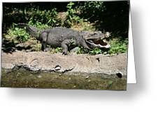 Alligator Surprise Greeting Card