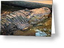 Crocodile Time  Greeting Card