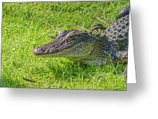 Alligator Up Close  Greeting Card by Allen Sheffield