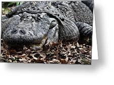 Alligator Waiting Greeting Card