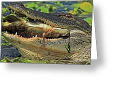 Alligator With Tilapia Greeting Card