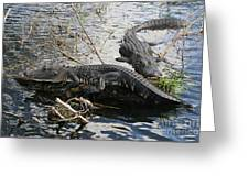 Alligators In An Everglades Swamp Greeting Card