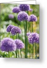 Allium 5 Greeting Card
