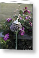 Allium Blossom With Cap Greeting Card