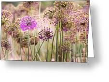 Allium Flowers Greeting Card