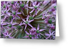 Allium Macro Greeting Card