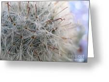 Allium Sativum Greeting Card