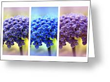 Allium Triptych Greeting Card