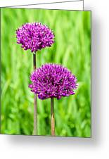 Alliums Greeting Card