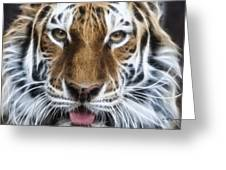 Alluring Tiger Greeting Card