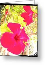 Almeria Flowers Greeting Card