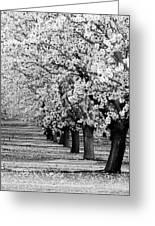 Springtime In The Almond Fields Greeting Card