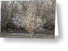 Almond Orchard 1 Greeting Card