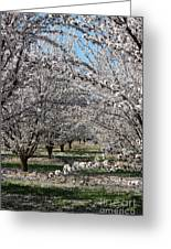 Almond Orchard Greeting Card