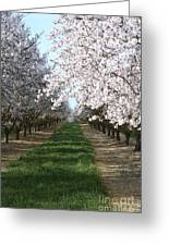 Almond Shadows Greeting Card