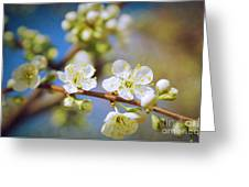 Almond Tree Branch Greeting Card