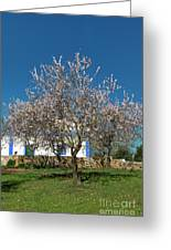 Almond Tree Cottage Greeting Card