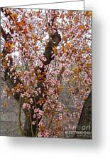 Almond Tree Flowers 05 Greeting Card