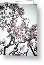 Almond Tree In Flower Greeting Card
