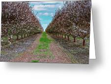 Almond Trees Of Button Willow Greeting Card