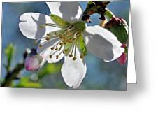 Almonds In Lachish 1 Greeting Card