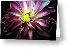 Almost Black Dahlia Greeting Card