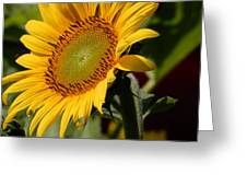 Almost Perfect Yellow Greeting Card