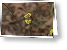Almost Spring Greeting Card