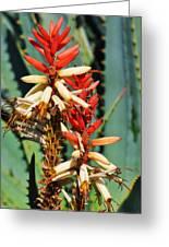 Aloe Bloom Desert Garden Greeting Card