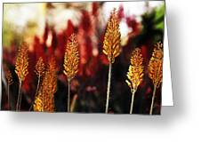Aloe Blossoms Greeting Card