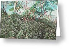 Aloe Garden Vumba Greeting Card