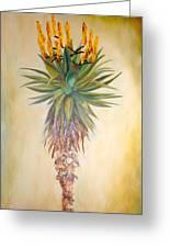 Aloe In The Sunlight Greeting Card