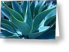 Aloe 2 Greeting Card