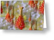 Aloe Vera Bloom Greeting Card