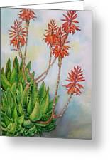 Aloe Nobiles Greeting Card