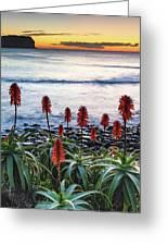 Aloe Vera In Flower At The Seaside Greeting Card
