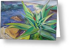 Aloe Vera Number Two Greeting Card