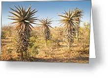 Aloe Vera Trees Botswana Greeting Card