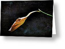 Alone In The Fall Greeting Card