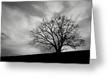 Alone On A Hill In Black And White Greeting Card