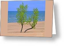 Alone On The Beach Greeting Card