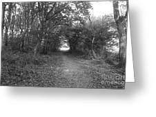 Along A Woodland Path Greeting Card