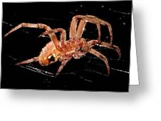 Along Came A Spider Greeting Card