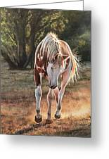 Along The Dusty Trail Greeting Card